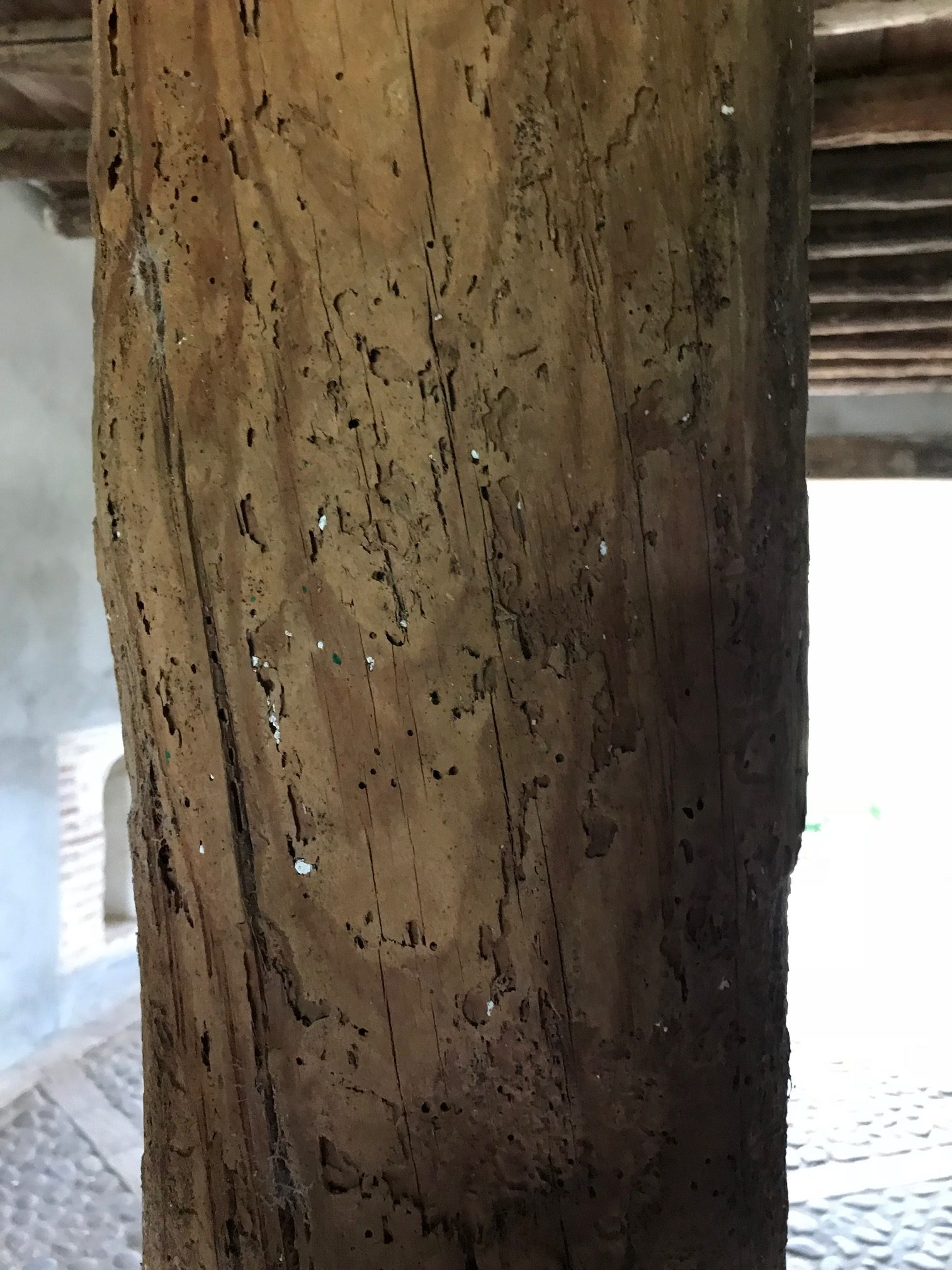 control de plagas sevilla